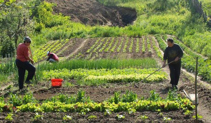 Sectorul vegetal aferent investițiilor în exploatațiiagricole a atins disponibilul alocat